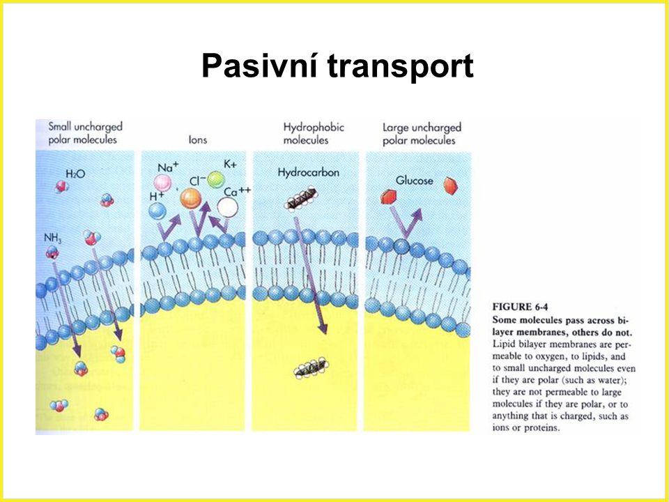 Pasivní transport