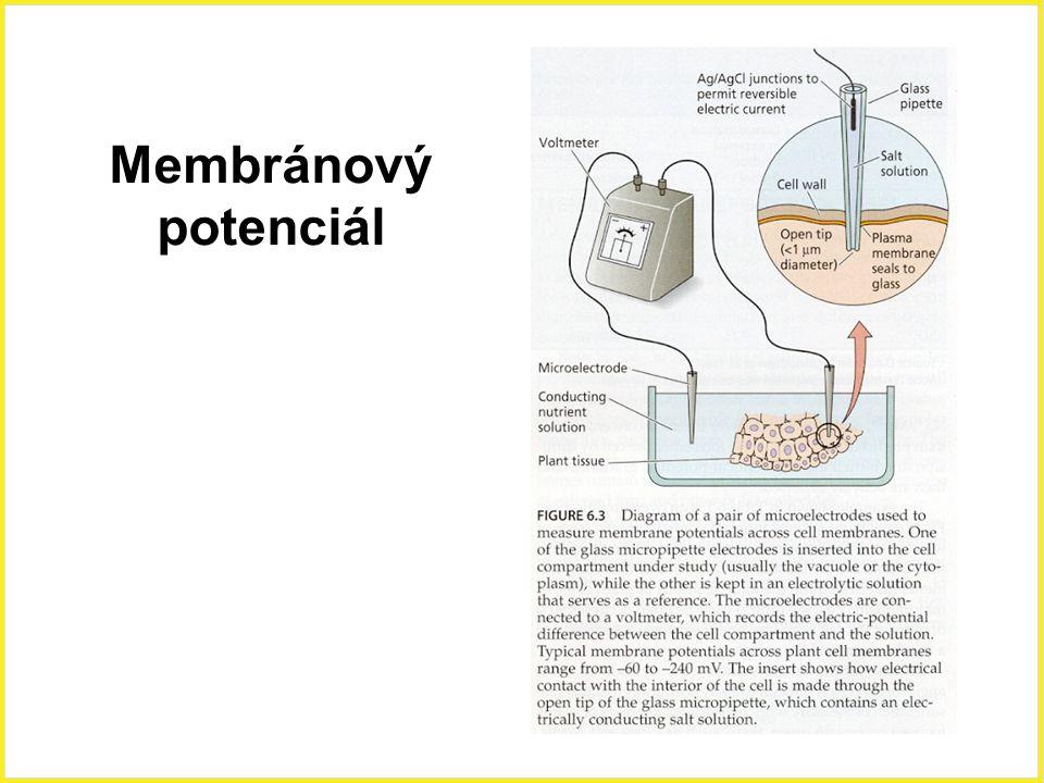 Membránový potenciál
