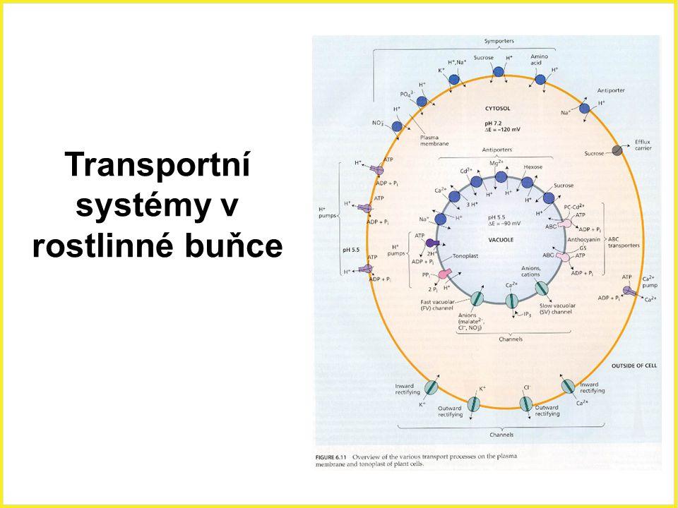 Transportní systémy v rostlinné buňce