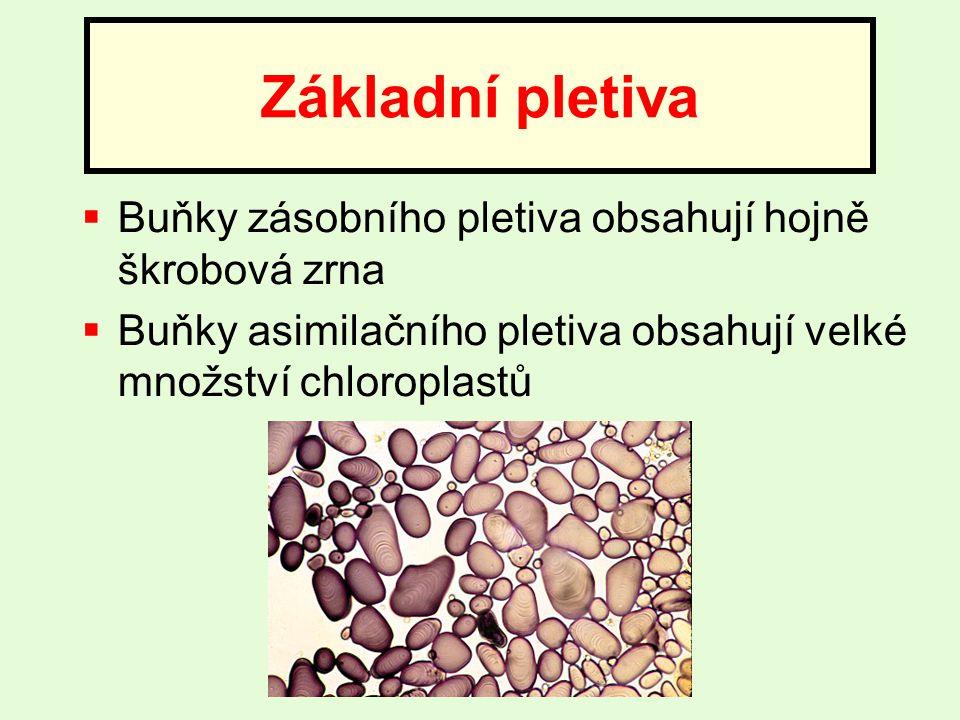  Buňky zásobního pletiva obsahují hojně škrobová zrna  Buňky asimilačního pletiva obsahují velké množství chloroplastů Základní pletiva
