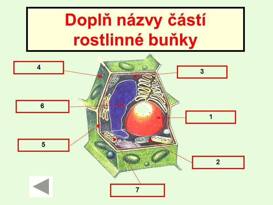 Doplň názvy částí rostlinné buňky 4 5 1 2 3 7 6