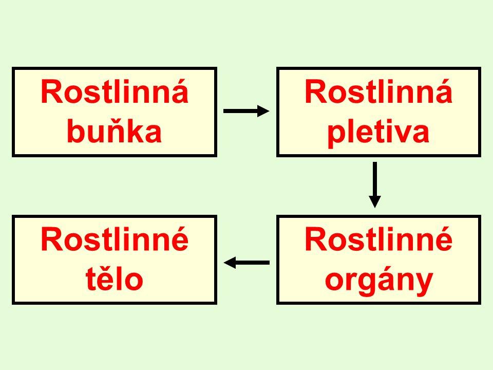 Rostlinná buňka Rostlinná pletiva Rostlinné orgány Rostlinné tělo