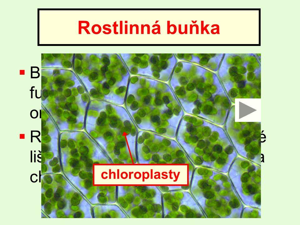  Buňka je základní stavební a funkční jednotka živých organismů  Rostlinná buňka se od živočišné liší přítomností buněčné stěny a chloroplastů Rostlinná buňka buněčná stěna jádro chloroplasty
