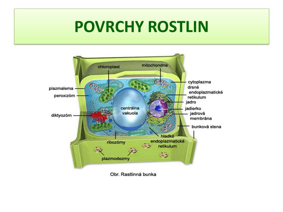 A) Stavba rostlinné buňky Jádro řídí činnost buňky, účastní se rozmnožování buňky