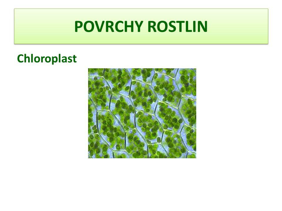 POVRCHY ROSTLIN Schéma chloroplastu 1.vnější membrána 2.