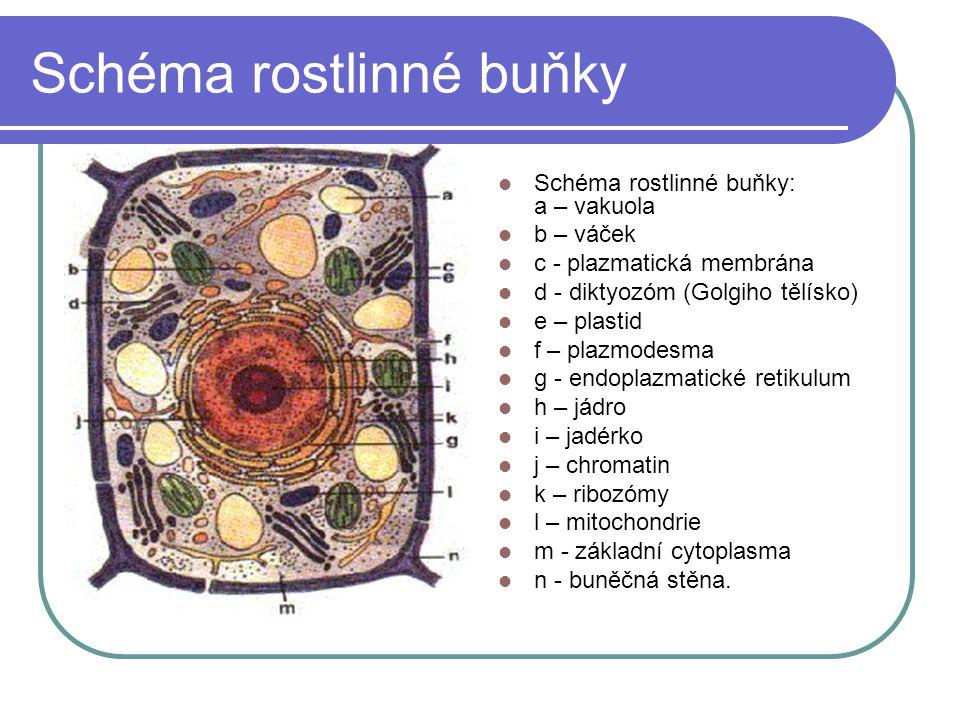 Vnitřní prostředí buňky Cytoplazma.Je tvořena hlavně vodou a globulárními bílkovinami.