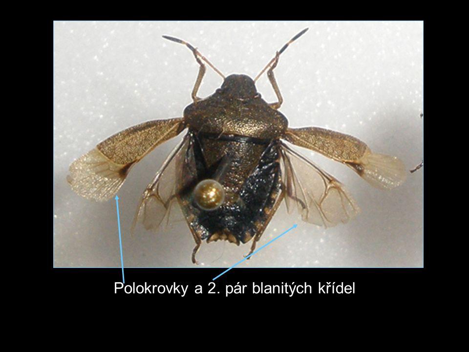 -Ploštice jsou známé zápachem (ochrana, ochromuje kořist, při páření) -Kosmopolitní -Různá zbarvení, tvary i velikosti -Rozmnožují se pohlavně a jejich vývoj je přímý -Při dotyku způsobují jejich sekrety u hmyzu ochrnutí