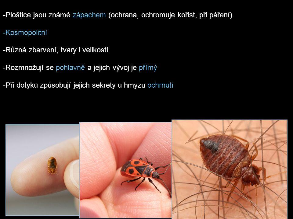 POTRAVA -býložravé -některé dravé -parazitují na teplokrevných živočiších včetně člověka -býložravé druhy zpravidla sají rostlinné šťávy -dravé druhy loví jiný hmyz
