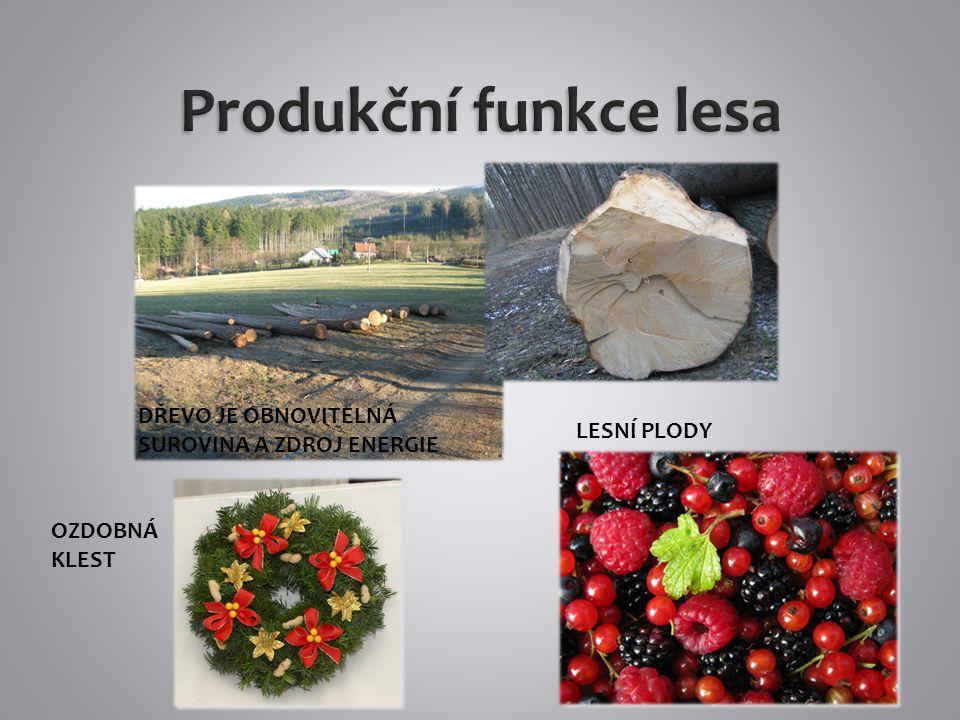 Klimatická funkce - bory produkují fytoncidy Rostliny spotřebovávají oxid uhličitý a produkují kyslík