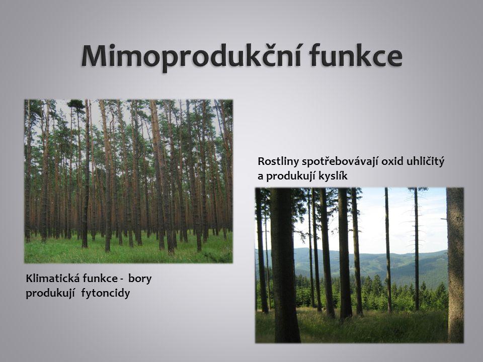 Les ovlivňuje kvalitu půdy a umožňuje její existenci a vývoj Lesní porost zabraňuje půdní erozi
