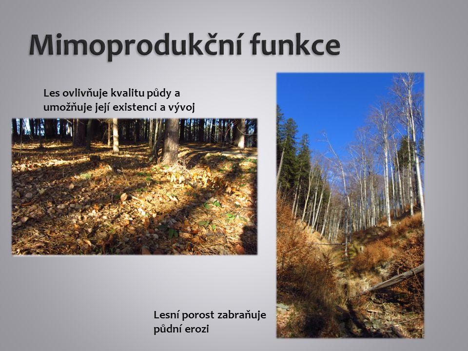 Vodohospodářská funkce – les zvyšuje vsak a snižuje odtok Les převádí povrchový odtok v podzemní, způsobuje retenci a akumulaci srážek.