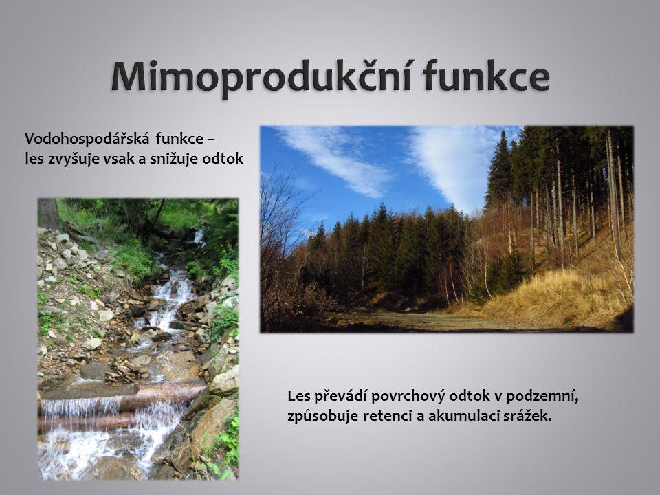 Rekreační funkce lesa