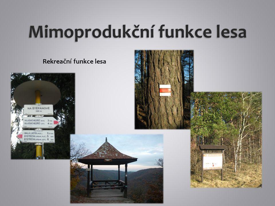 Ekologická funkce – les umožňuj existenci mnoha živých organismů