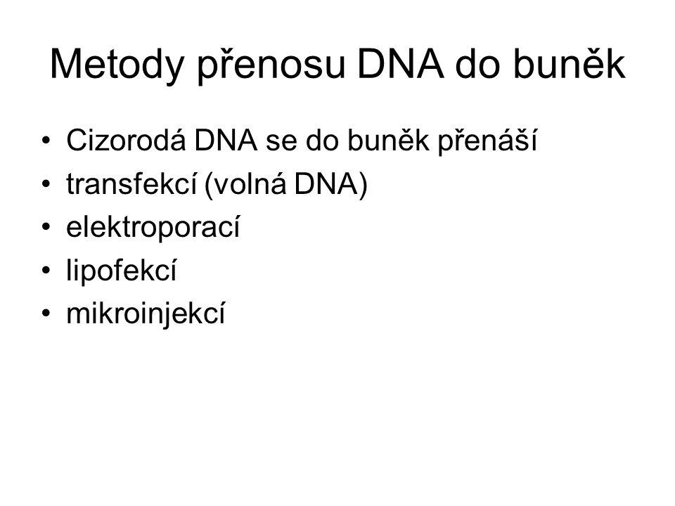 Metody přenosu DNA do buněk Cizorodá DNA se do buněk přenáší transfekcí (volná DNA) elektroporací lipofekcí mikroinjekcí