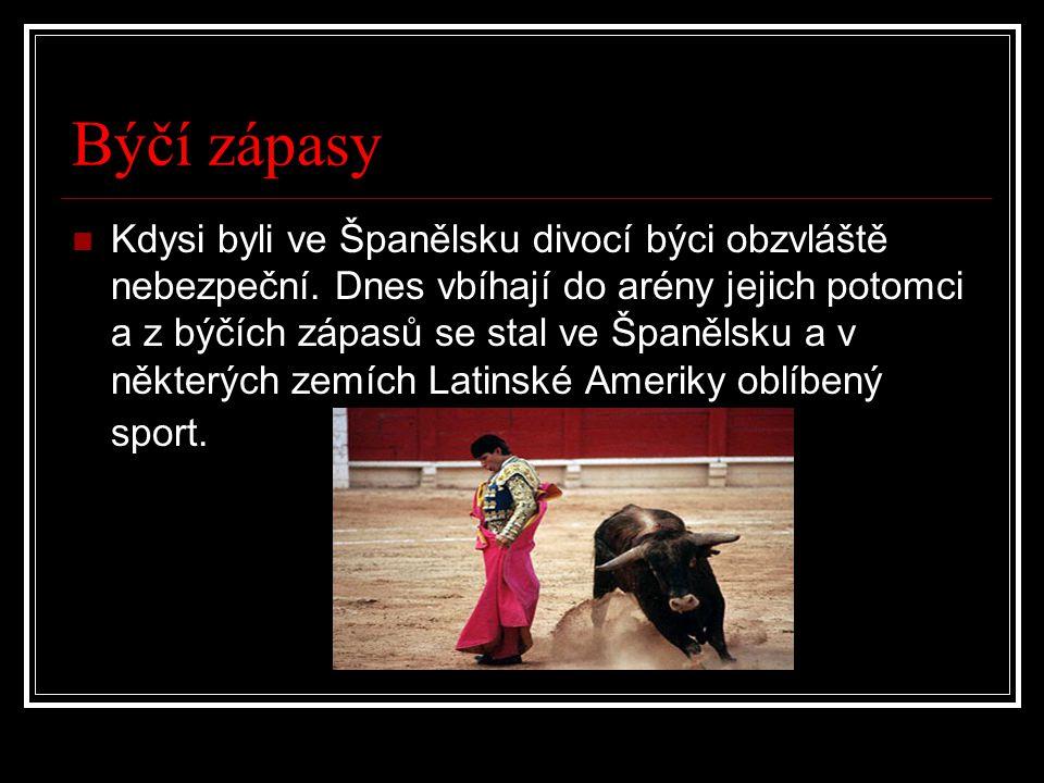 Býčí zápasy Kdysi byli ve Španělsku divocí býci obzvláště nebezpeční. Dnes vbíhají do arény jejich potomci a z býčích zápasů se stal ve Španělsku a v