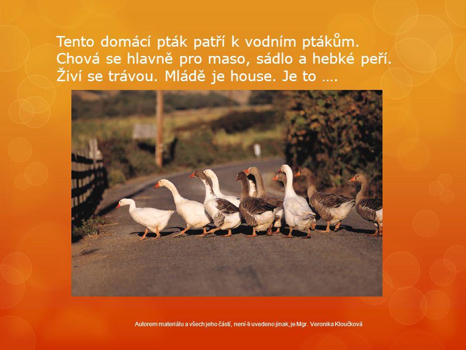 Tento domácí pták patří k vodním ptákům. Chová se hlavně pro maso, sádlo a hebké peří. Živí se trávou. Mládě je house. Je to …. Autorem materiálu a vš