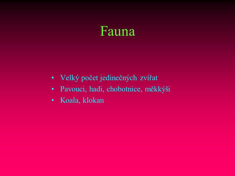 Fauna Velký počet jedinečných zvířat Pavouci, hadi, chobotnice, měkkýši Koala, klokan