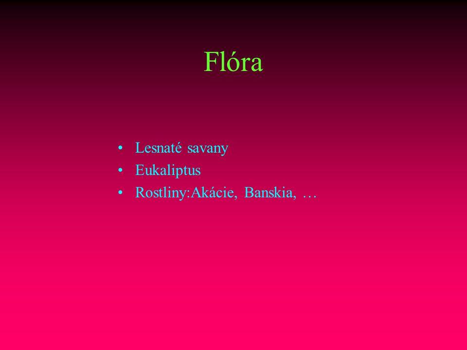 Flóra Lesnaté savany Eukaliptus Rostliny:Akácie, Banskia, …