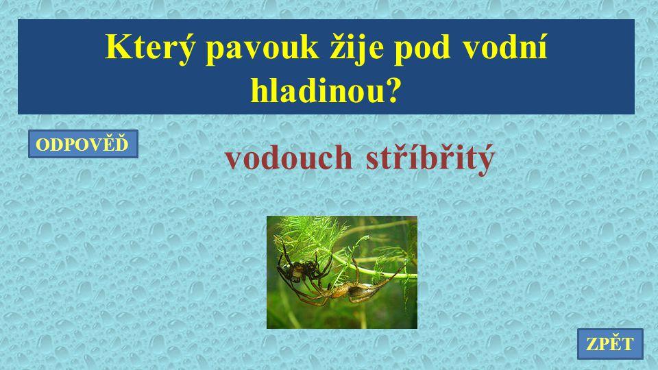 Který pavouk žije pod vodní hladinou? ZPĚT ODPOVĚĎ vodouch stříbřitý