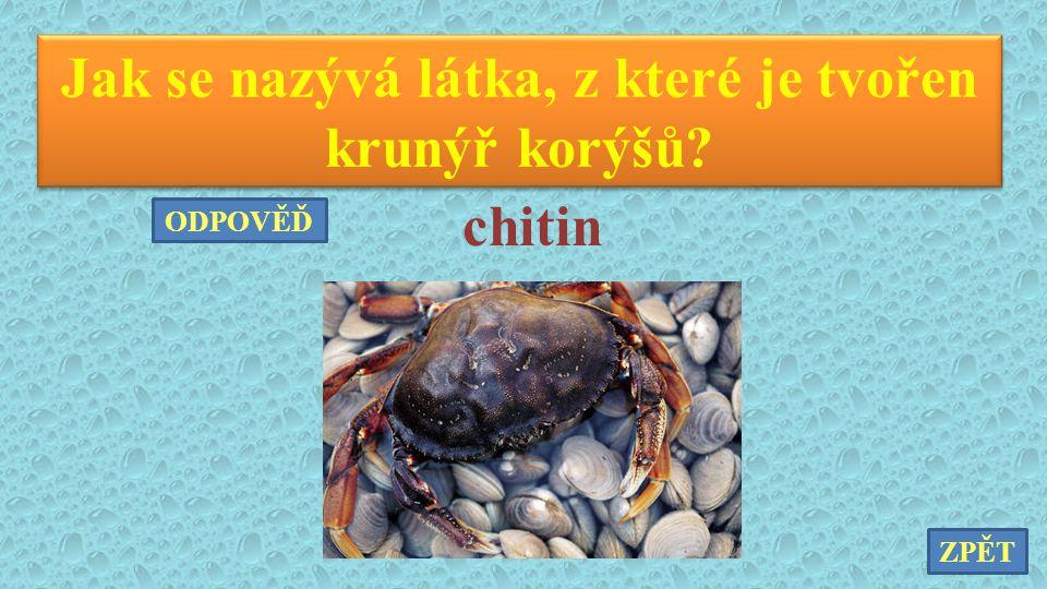 Jak se nazývá látka, z které je tvořen krunýř korýšů? chitin ZPĚT ODPOVĚĎ