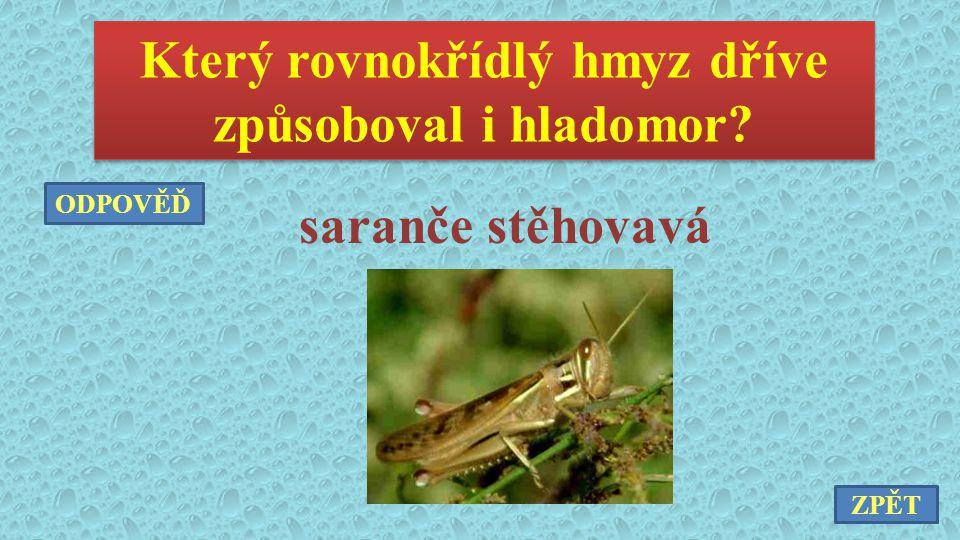 Který rovnokřídlý hmyz dříve způsoboval i hladomor? saranče stěhovavá ZPĚT ODPOVĚĎ