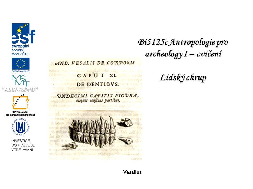 Vesalius Bi5125c Antropologie pro archeology I – cvičení Lidský chrup