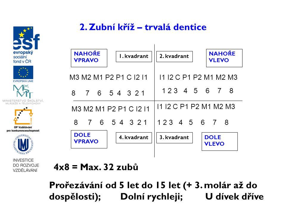 2. Zubní kříž – trvalá dentice M3 M2 M1 P2 P1 C I2 I1 I1 I2 C P1 P2 M1 M2 M3 1. kvadrant2. kvadrant 3. kvadrant4. kvadrant NAHOŘE VPRAVO NAHOŘE VLEVO