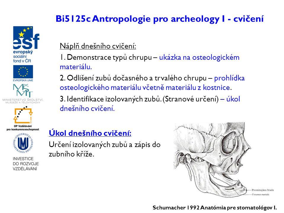 Bi5125c Antropologie pro archeology I - cvičení Náplň dnešního cvičení: 1. Demonstrace typů chrupu – ukázka na osteologickém materiálu. 2. Odlišení zu