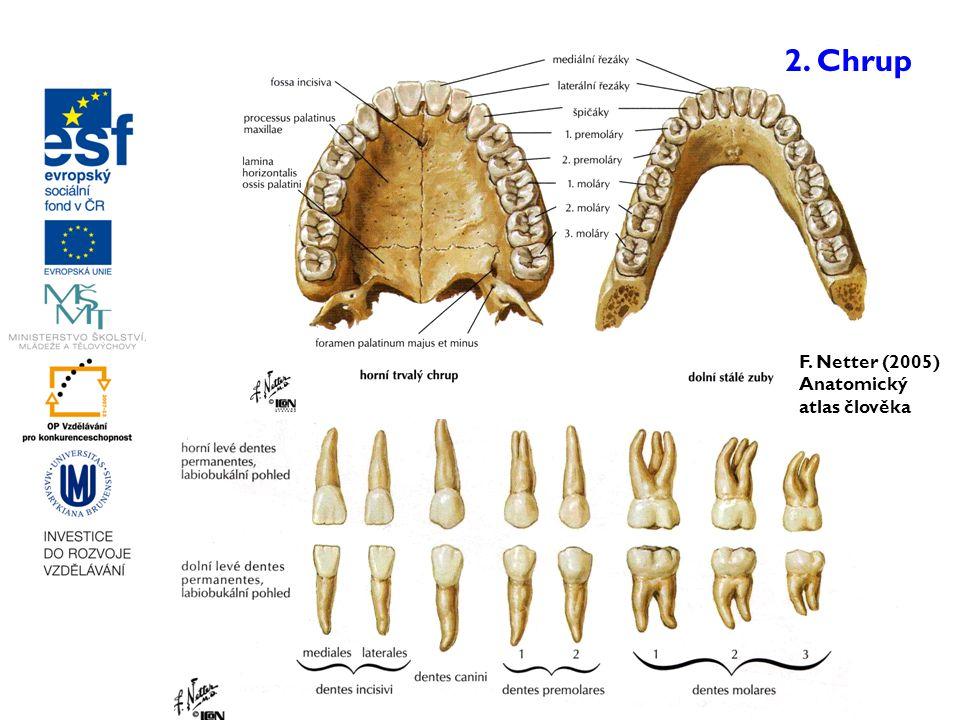 F. Netter (2005) Anatomický atlas člověka 2. Chrup