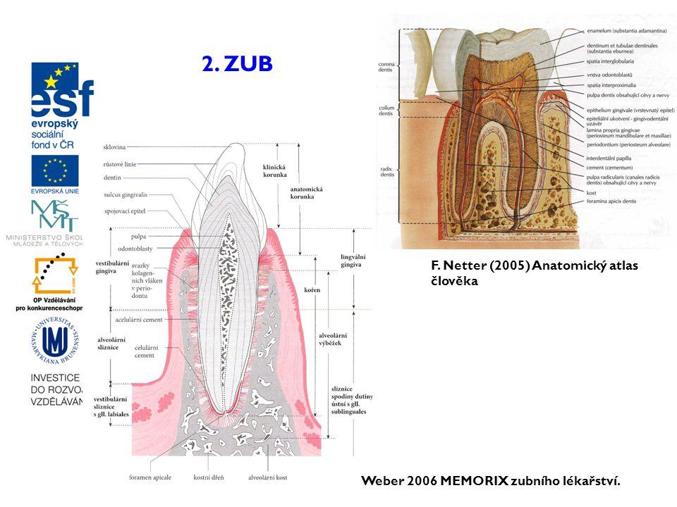 Weber 2006 MEMORIX zubního lékařství. F. Netter (2005) Anatomický atlas člověka 2. ZUB