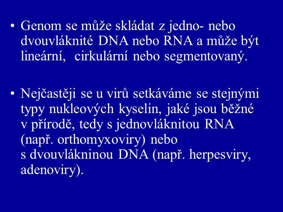 Genom se může skládat z jedno- nebo dvouvláknité DNA nebo RNA a může být lineární, cirkulární nebo segmentovaný.
