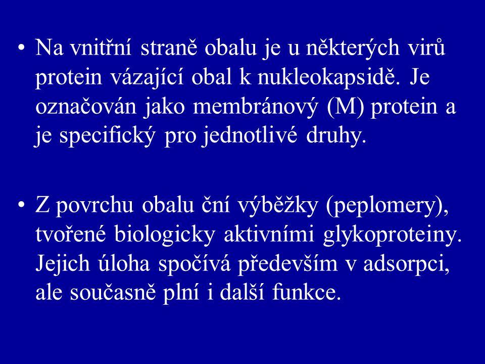 Na vnitřní straně obalu je u některých virů protein vázající obal k nukleokapsidě.