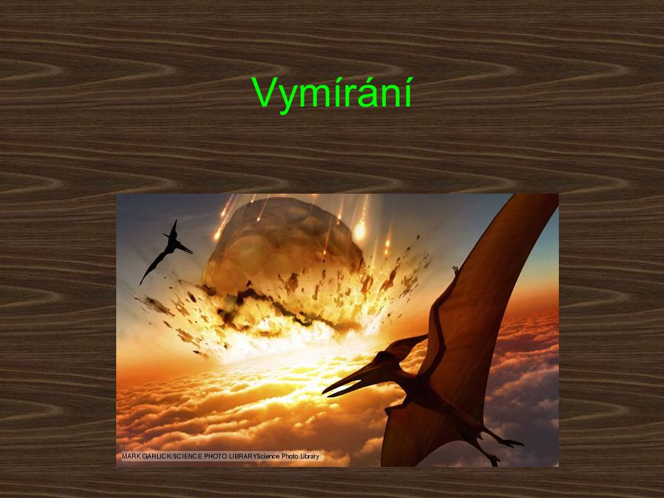 Sukcese druhů Oportunní druhy (Liliputánský fenomén) Návrat původních druhů z refugií Lazarské druhy Živoucí zkameněliny –Latimeria 360 mil.