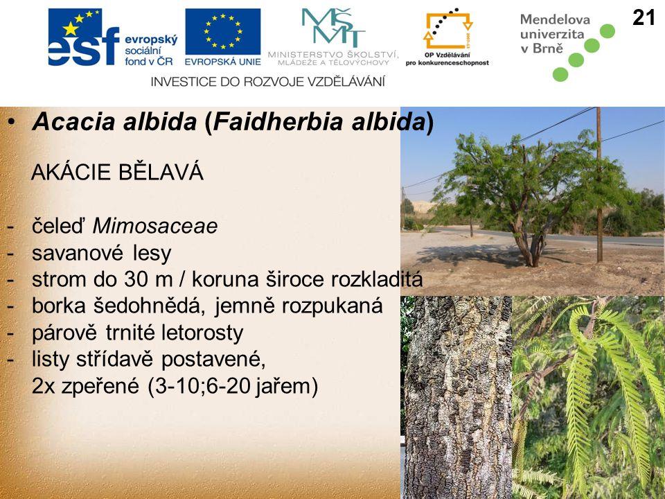 AKÁCIE BĚLAVÁ -čeleď Mimosaceae - savanové lesy -strom do 30 m / koruna široce rozkladitá -borka šedohnědá, jemně rozpukaná -párově trnité letorosty -listy střídavě postavené, 2x zpeřené (3-10;6-20 jařem) 21 Acacia albida (Faidherbia albida)