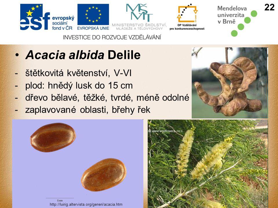 Acacia albida Delile -štětkovitá květenství, V-VI -plod: hnědý lusk do 15 cm -dřevo bělavé, těžké, tvrdé, méně odolné -zaplavované oblasti, břehy řek 22 http://luirig.altervista.org/generi/acacia.htm