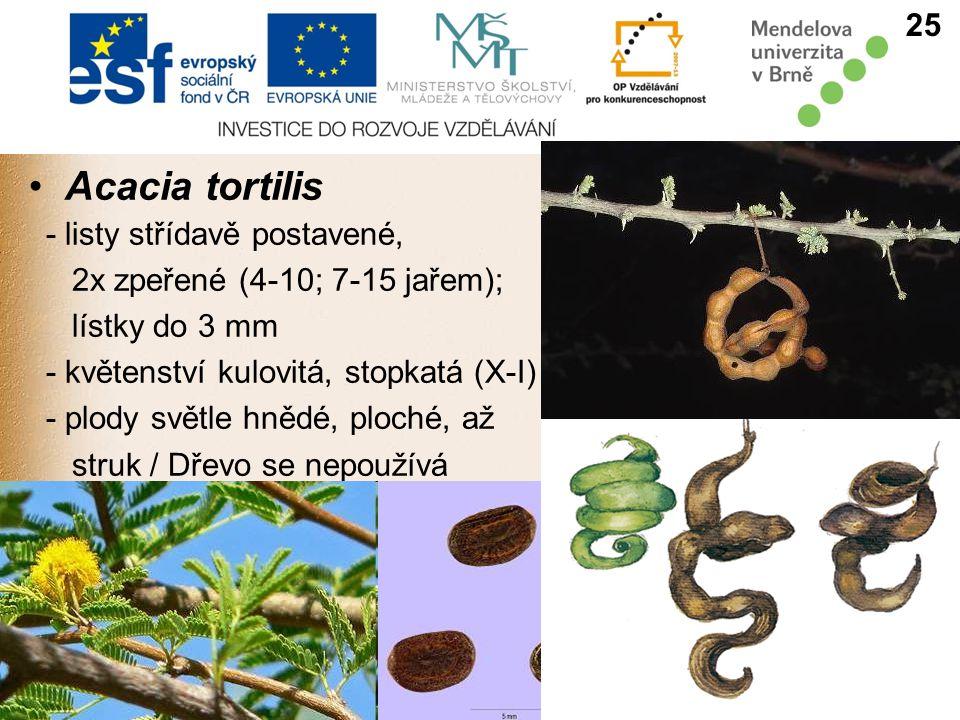 Acacia tortilis - listy střídavě postavené, 2x zpeřené (4-10; 7-15 jařem); lístky do 3 mm - květenství kulovitá, stopkatá (X-I) - plody světle hnědé, ploché, až struk / Dřevo se nepoužívá 25