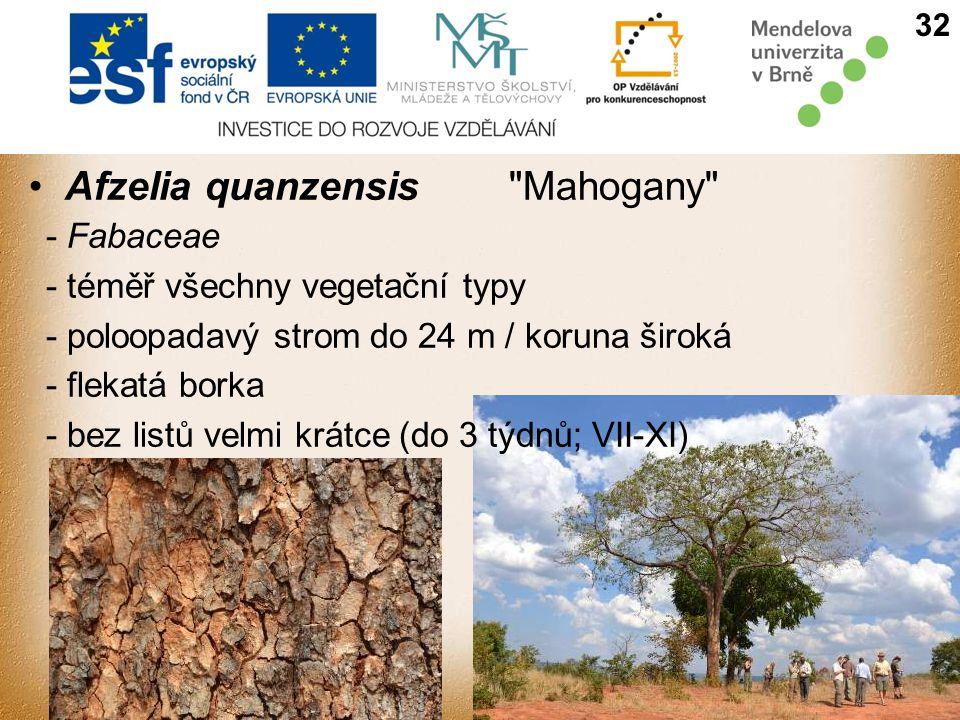 Afzelia quanzensis Mahogany - Fabaceae - téměř všechny vegetační typy - poloopadavý strom do 24 m / koruna široká - flekatá borka - bez listů velmi krátce (do 3 týdnů; VII-XI) 32
