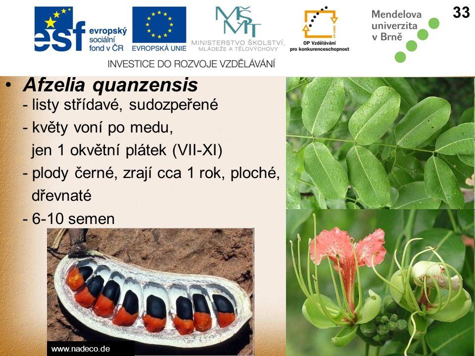 Afzelia quanzensis - listy střídavé, sudozpeřené - květy voní po medu, jen 1 okvětní plátek (VII-XI) - plody černé, zrají cca 1 rok, ploché, dřevnaté - 6-10 semen 33 www.nadeco.de