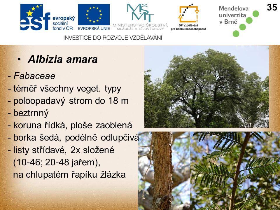 Albizia amara 35 - Fabaceae - téměř všechny veget.