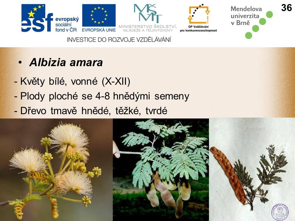 Albizia amara - Květy bílé, vonné (X-XII) - Plody ploché se 4-8 hnědými semeny - Dřevo tmavě hnědé, těžké, tvrdé 36