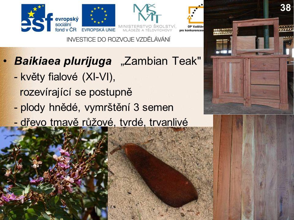 """Baikiaea plurijuga""""Zambian Teak - květy fialové (XI-VI), rozevírající se postupně - plody hnědé, vymrštění 3 semen - dřevo tmavě růžové, tvrdé, trvanlivé 738"""