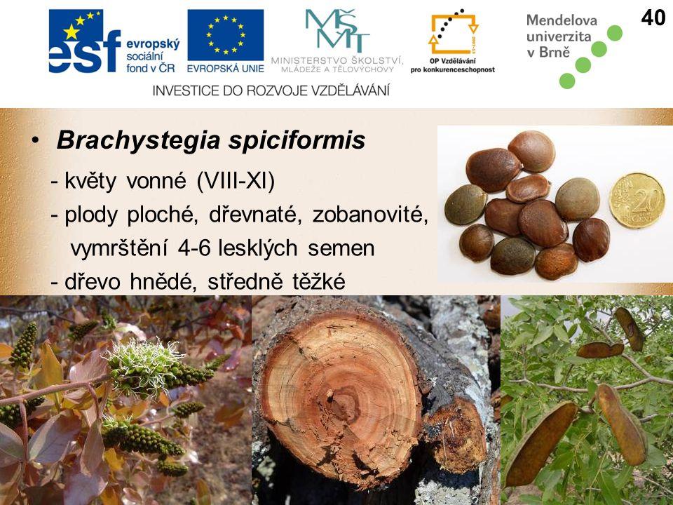 Brachystegia spiciformis - květy vonné (VIII-XI) - plody ploché, dřevnaté, zobanovité, vymrštění 4-6 lesklých semen - dřevo hnědé, středně těžké 40