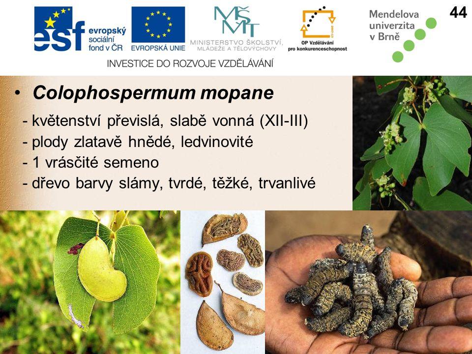 Colophospermum mopane - květenství převislá, slabě vonná (XII-III) - plody zlatavě hnědé, ledvinovité - 1 vrásčité semeno - dřevo barvy slámy, tvrdé, těžké, trvanlivé 44