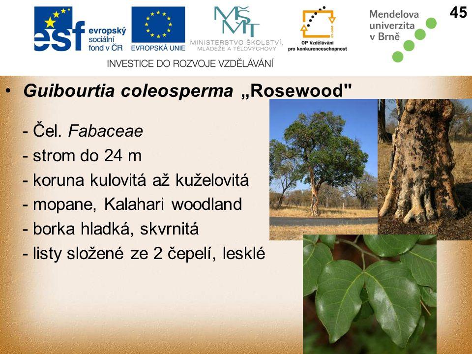 """Guibourtia coleosperma""""Rosewood - Čel."""