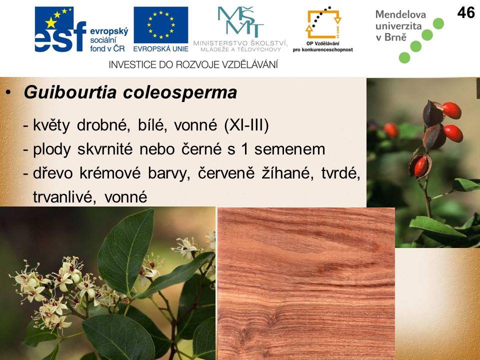 Guibourtia coleosperma - květy drobné, bílé, vonné (XI-III) - plody skvrnité nebo černé s 1 semenem - dřevo krémové barvy, červeně žíhané, tvrdé, trvanlivé, vonné 46