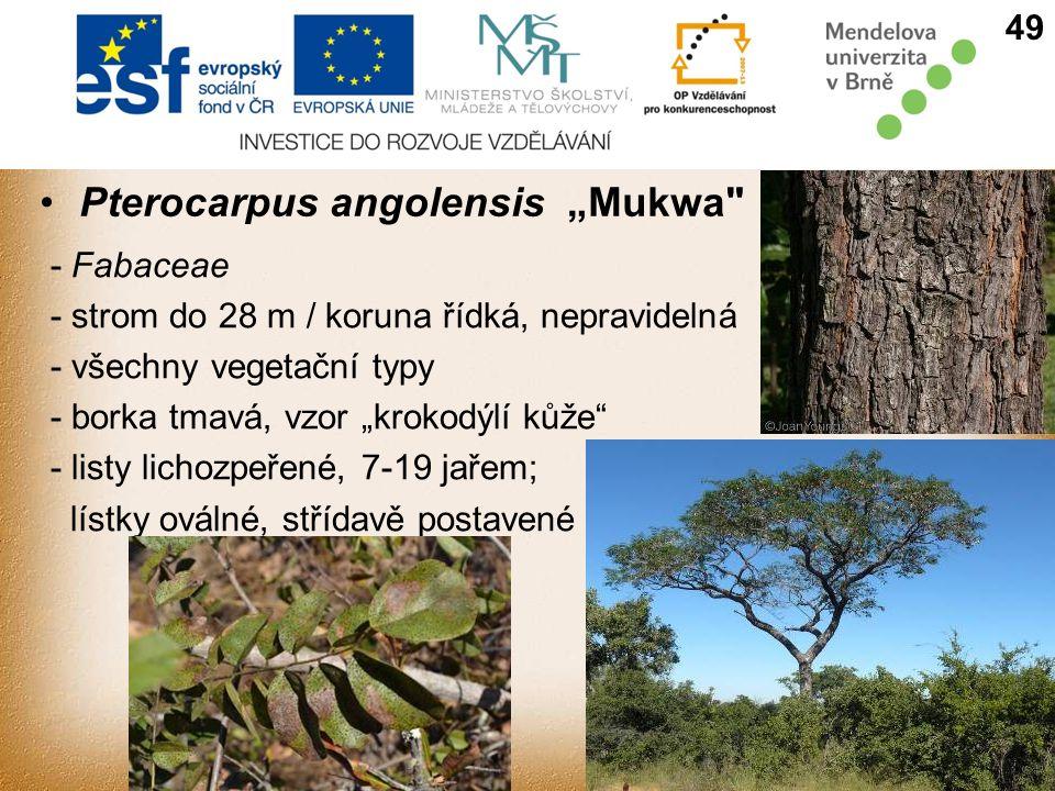 """Pterocarpus angolensis""""Mukwa - Fabaceae - strom do 28 m / koruna řídká, nepravidelná - všechny vegetační typy - borka tmavá, vzor """"krokodýlí kůže - listy lichozpeřené, 7-19 jařem; lístky oválné, střídavě postavené 49"""