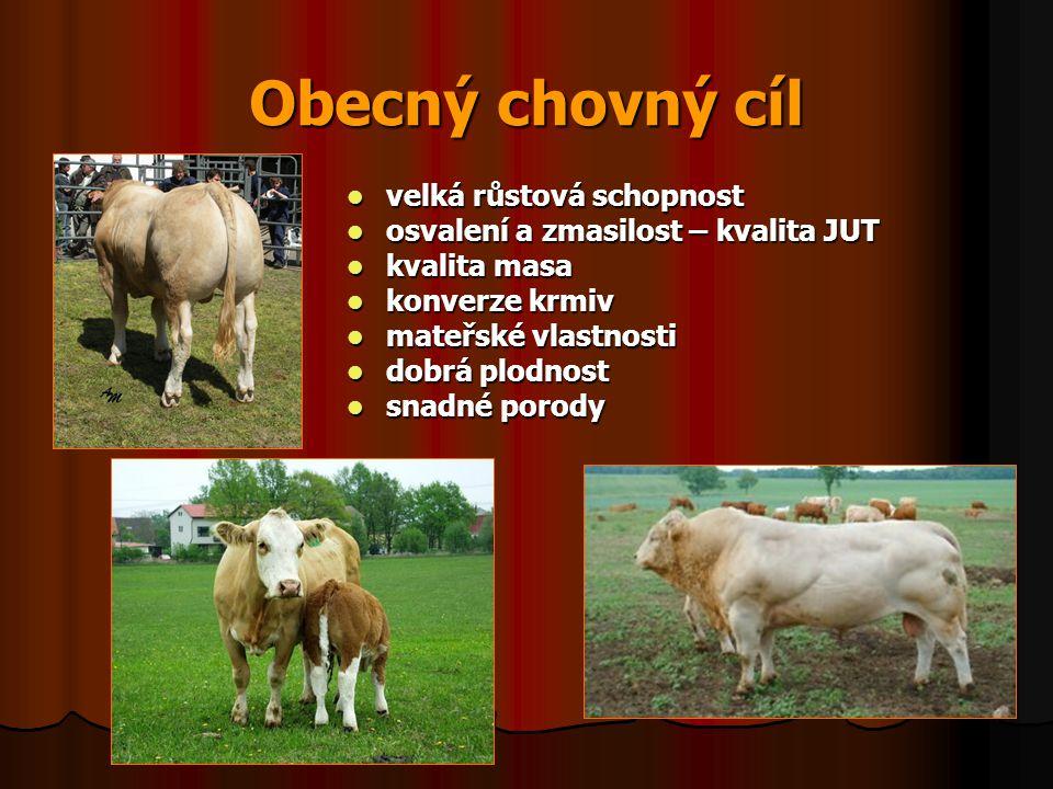 Obecný chovný cíl velká růstová schopnost velká růstová schopnost osvalení a zmasilost – kvalita JUT osvalení a zmasilost – kvalita JUT kvalita masa k