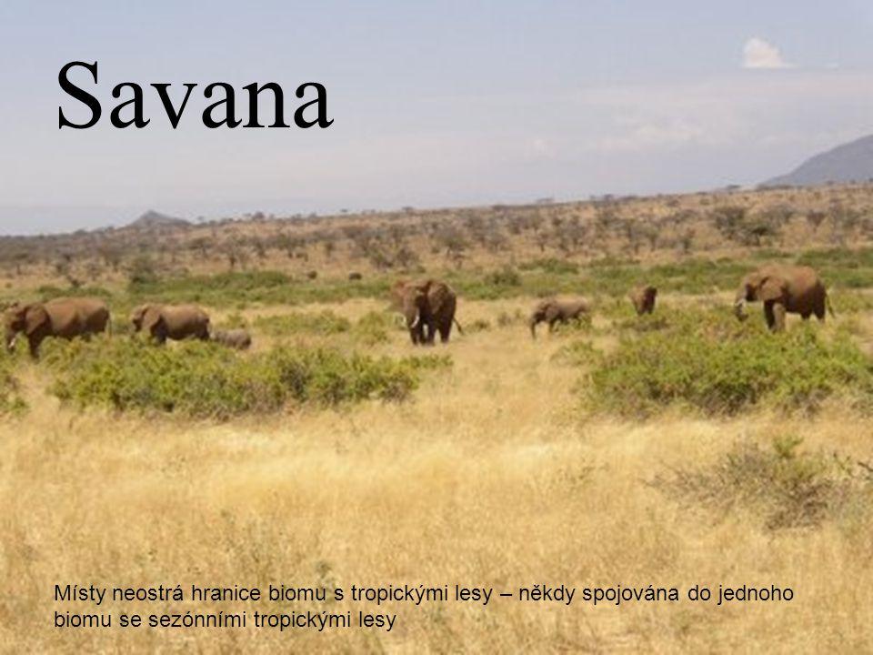 "http://staffwww.fullcoll.edu/tmorris/elements_of_ecology/images/savanna_2.jpg Termín savana pochází z karibské oblasti a označuje ""pláň bez stromů ."