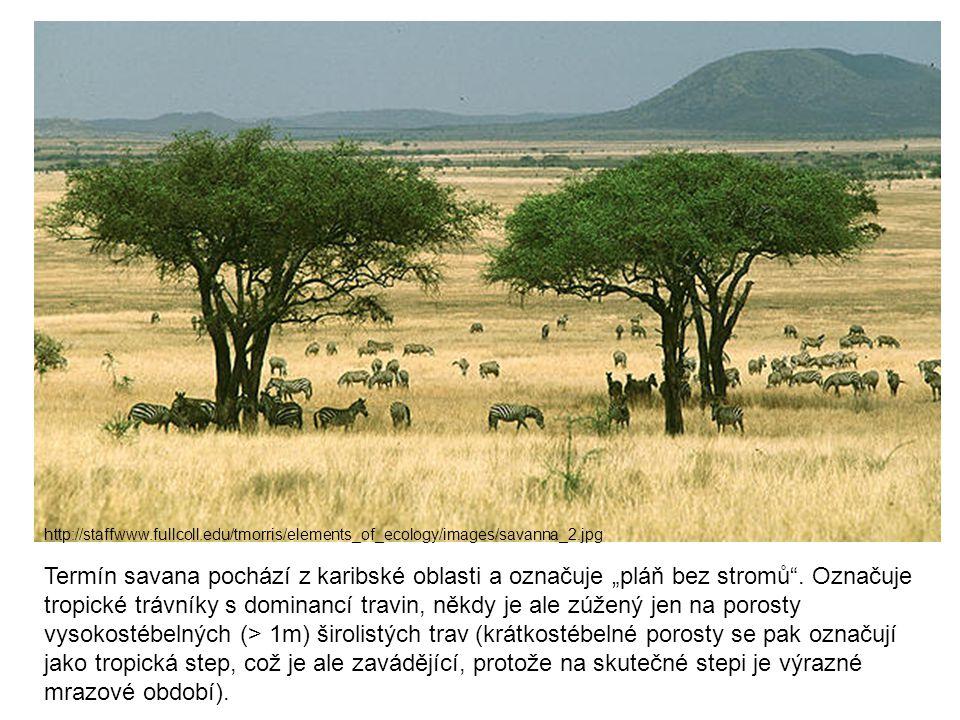 "http://staffwww.fullcoll.edu/tmorris/elements_of_ecology/images/savanna_2.jpg Termín savana pochází z karibské oblasti a označuje ""pláň bez stromů"". O"