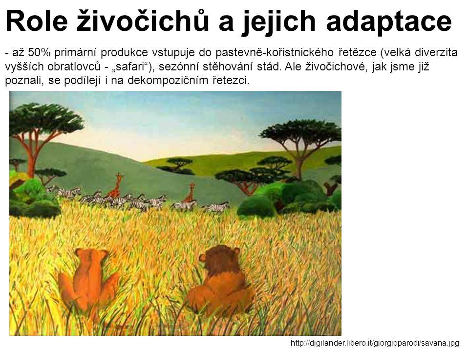 http://digilander.libero.it/giorgioparodi/savana.jpg Role živočichů a jejich adaptace - až 50% primární produkce vstupuje do pastevně-kořistnického ře
